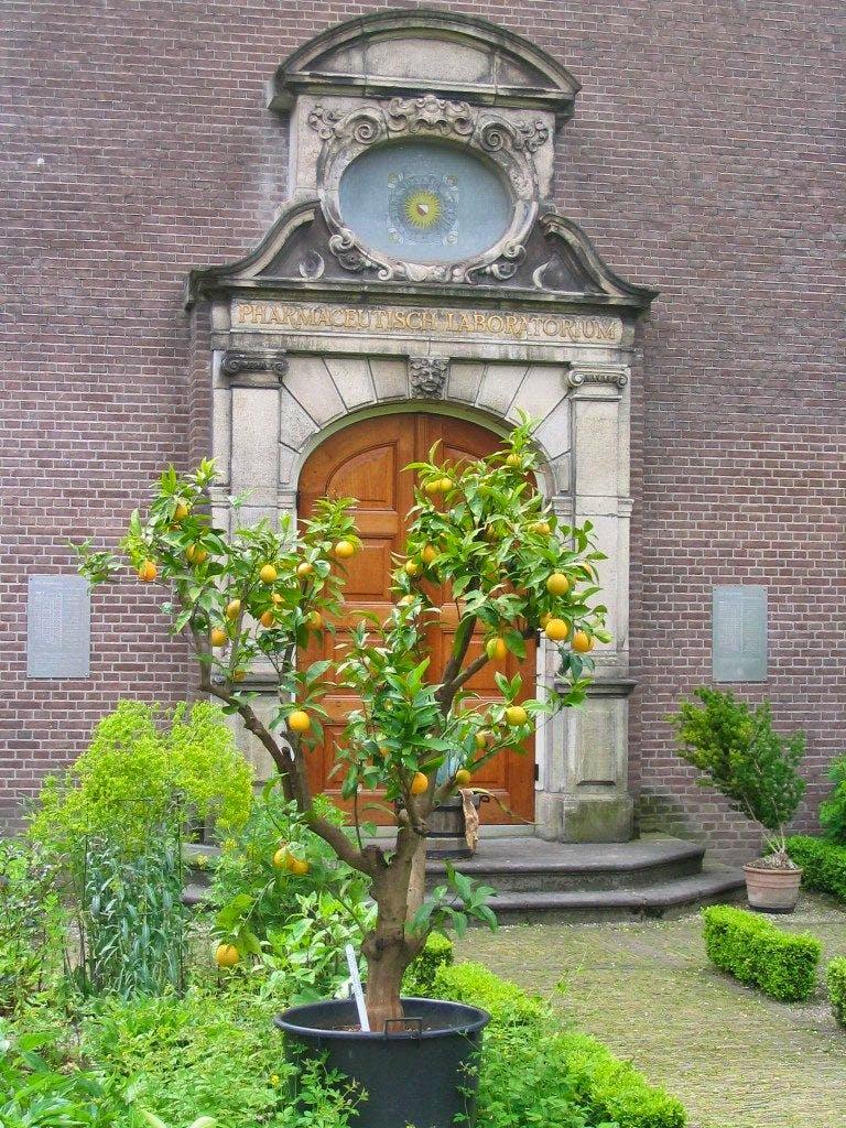 Van hortus medicus naar hortus botanicus: 375 jaar Botanische Tuinen