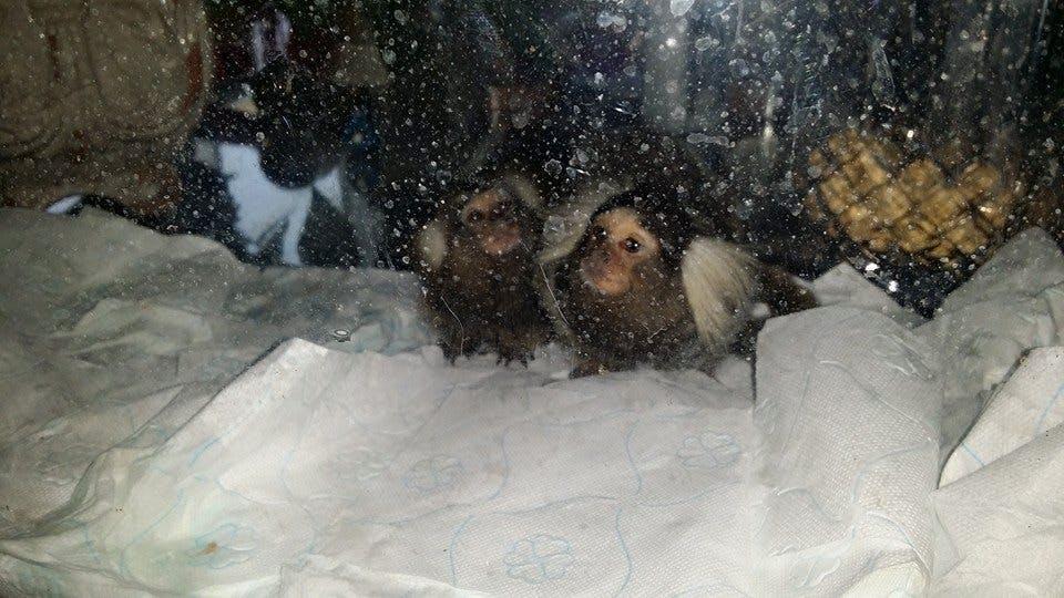 Doos met apen gedumpt in Utrechtse wijk Ondiep