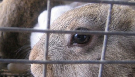 UMC en Universiteit Utrecht begonnen met herplaatsen ex-proefdieren