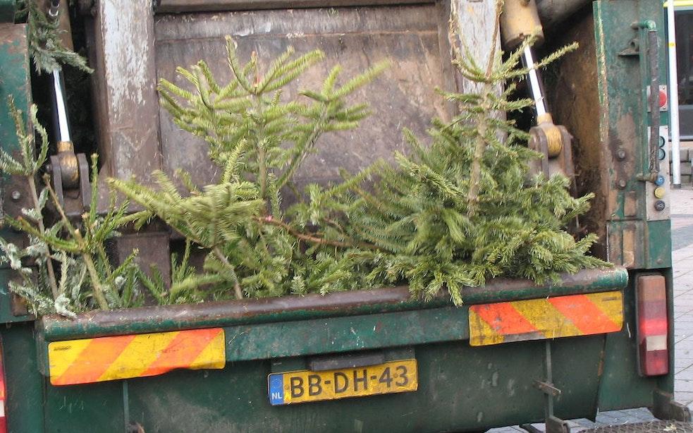 Jaarlijks gooien Utrechters tienduizenden kerstbomen weg, kan dat duurzamer?