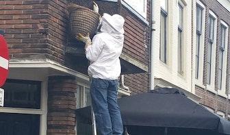 Bijen strijken neer in Lange Nieuwstraat