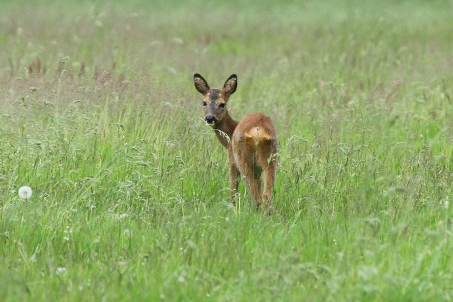Utrechts Landschap zoekt nieuwe 'Beschermers' voor onderhoud Utrechtse natuur