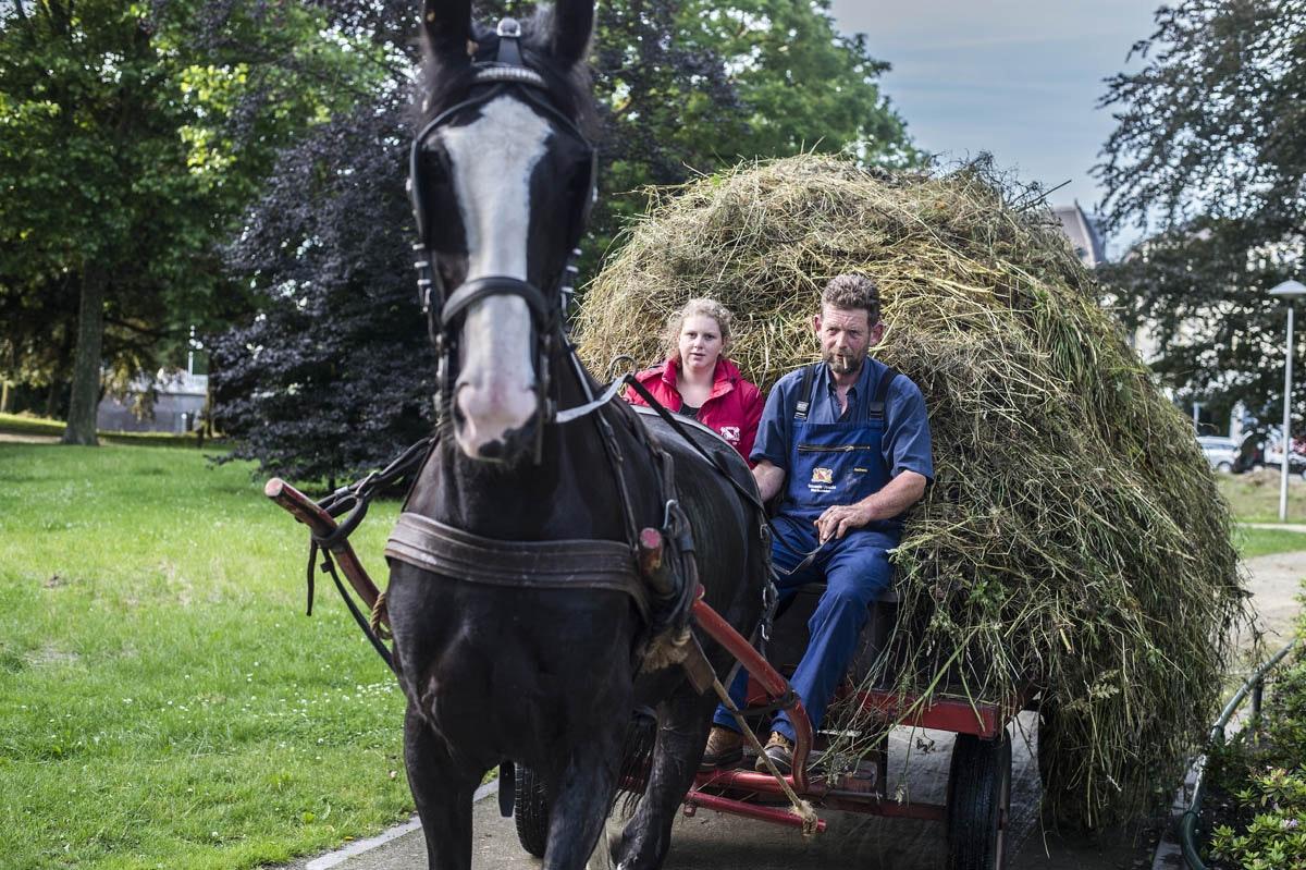 20160622-paard-en-wagen-002