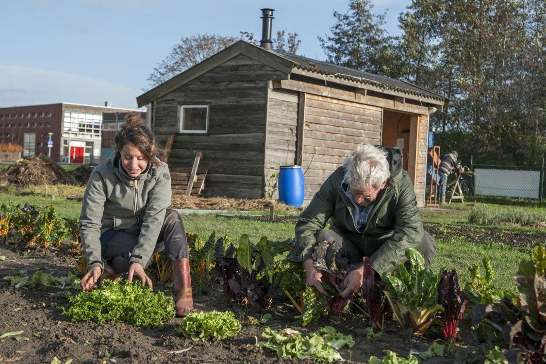 Onder de Mensen: Zingend achter de grasmaaier in Kasteeltuin Nijevelt