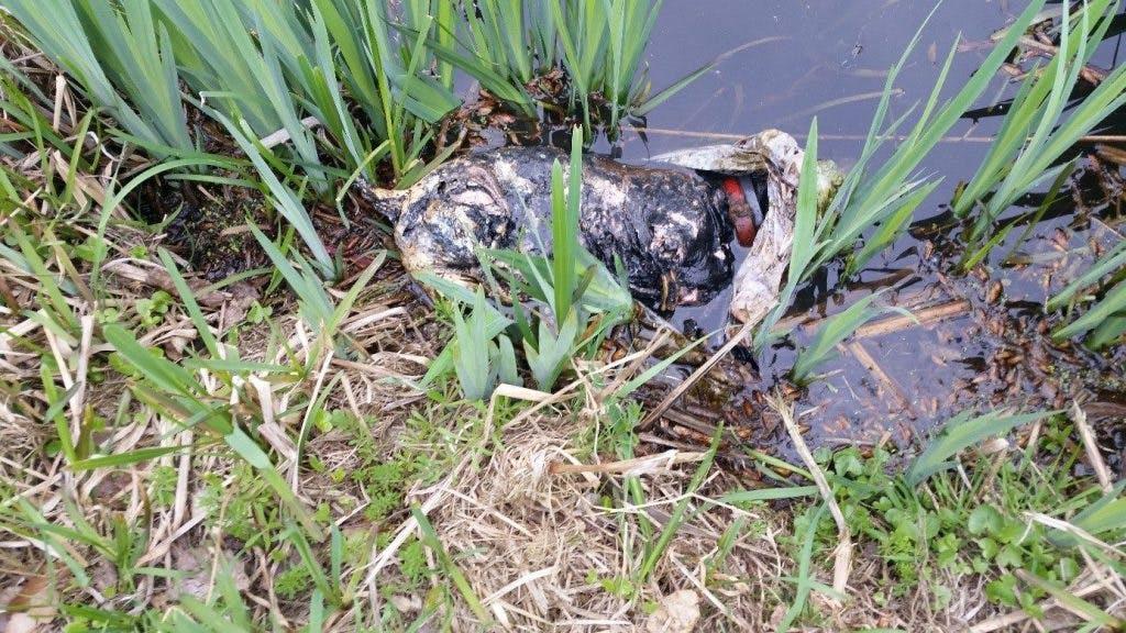 Dode hond gedumpt in water Fort Blauwkapel: Politie zoekt getuigen