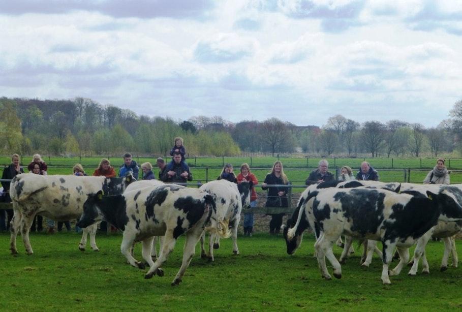 Op stap met de kids: Koeiendans, Geolab en Uk en Puk Festival