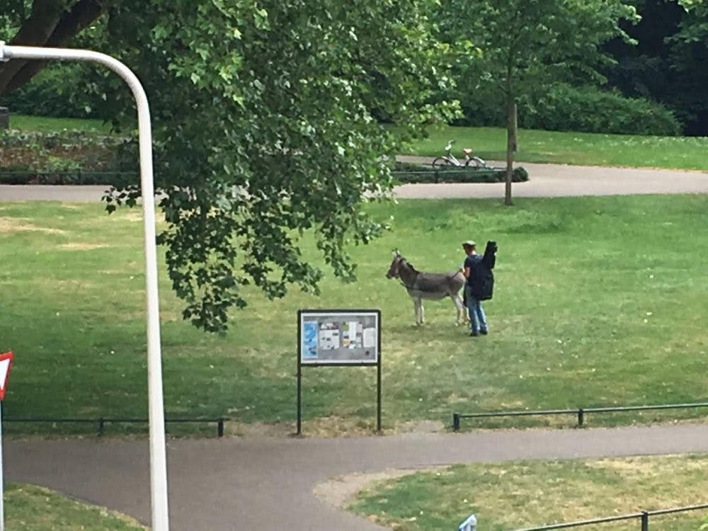 Ezel uitgelaten in het Wilhelminapark