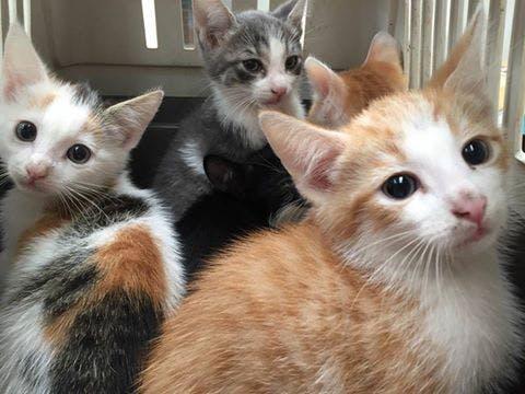 Vijf kittens achtergelaten op de Ampèrestraat in Zuilen: 'Kommer en kwel'