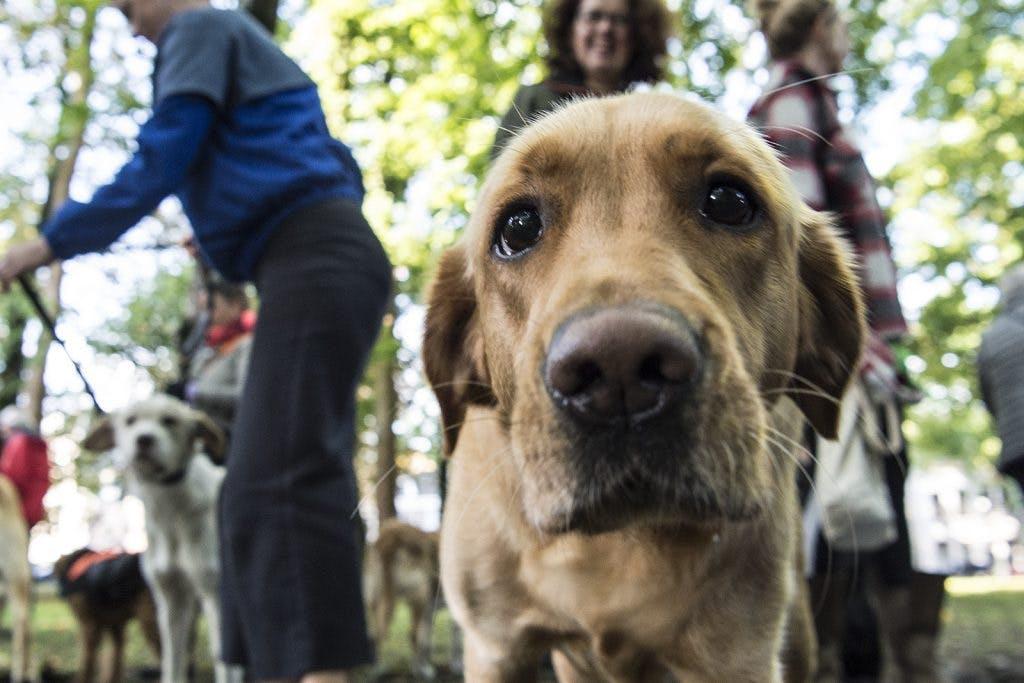 Filmpje: Tientallen honden op een rij in het Zocherpark