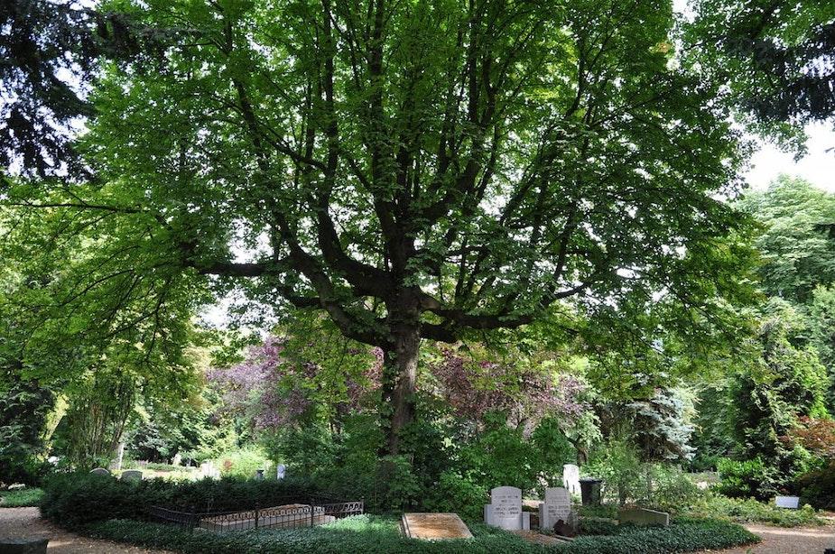 Haalbaarheidsonderzoek naar nieuw crematorium in Utrecht