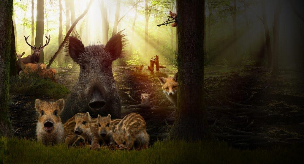 Zaterdag 7 april met 4 personen naar de film Wild?