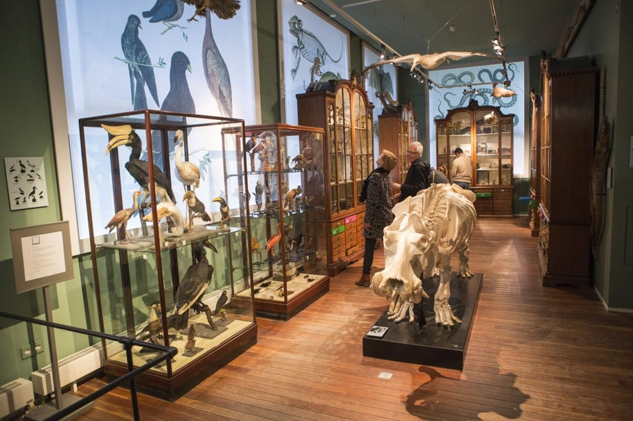 Foto's: Dit zijn de bijzondere objecten in het Utrechtse rariteitenkabinet