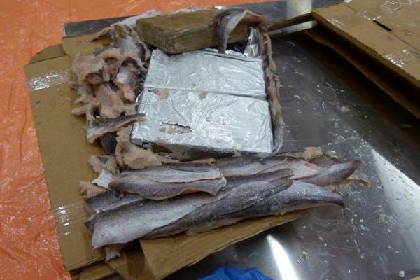 1125 kilo cocaïne tussen bevroren vis