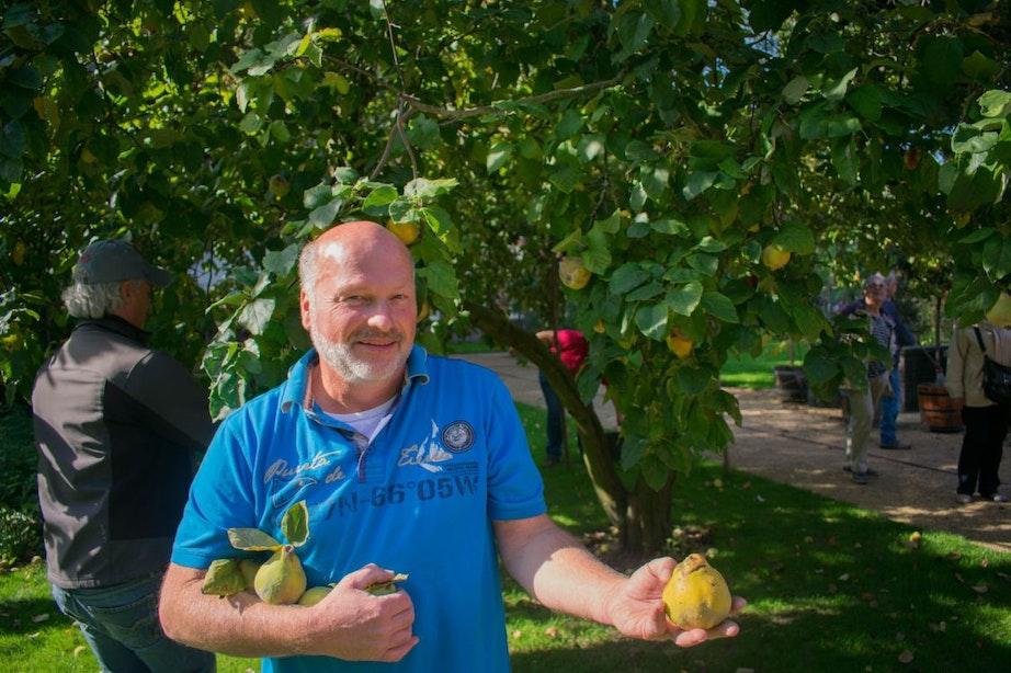 Oude Hortus deelt vanwege goede oogst gratis kweeperen uit