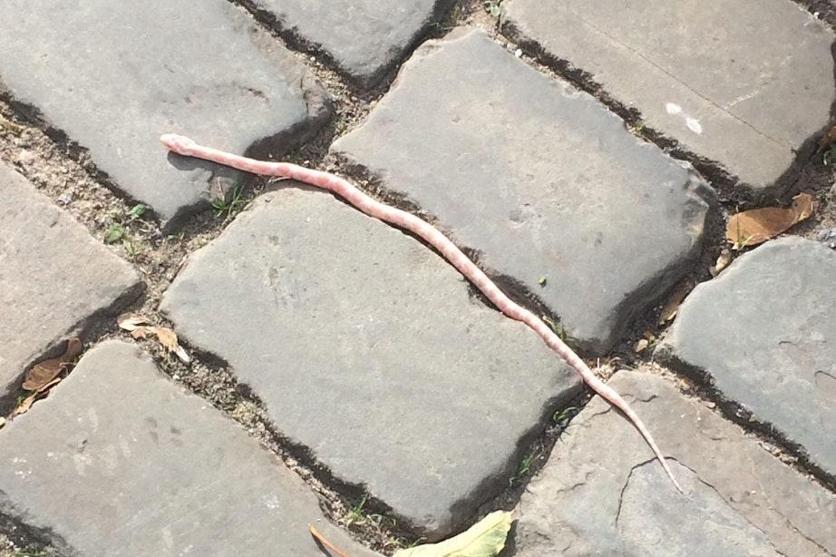 Buurtbewoners vinden slang in Utrechtse binnenstad