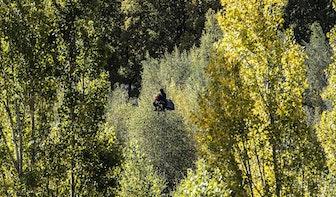 Partij voor de Dieren vraagt om opheldering 'illegale bomenkap' bij The Swamp