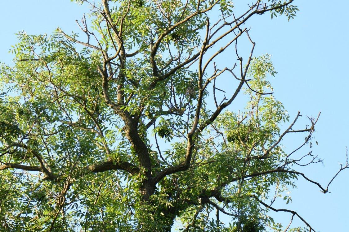Mogelijk kap van 150 bomen bij Nieuw Amelisweerd