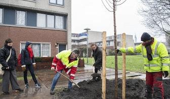 Ruim 1170 bomen in Utrecht gaan vervangen worden: 'Zieke boom eruit, gezonde boom erin'