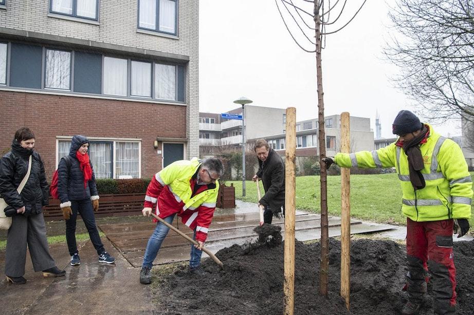 Ook dit jaar wordt weer een groot aantal essen in Utrecht gekapt en gesnoeid vanwege ziekte
