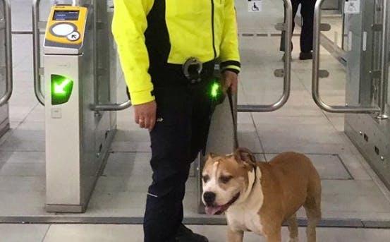 Ontsnapte hond stapt in Leidsche Rijn op trein naar Utrecht Centraal