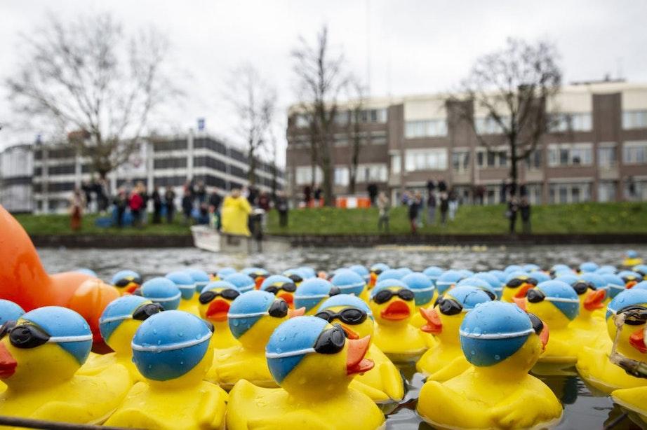 2.000 badeenden in de Utrechtse singel