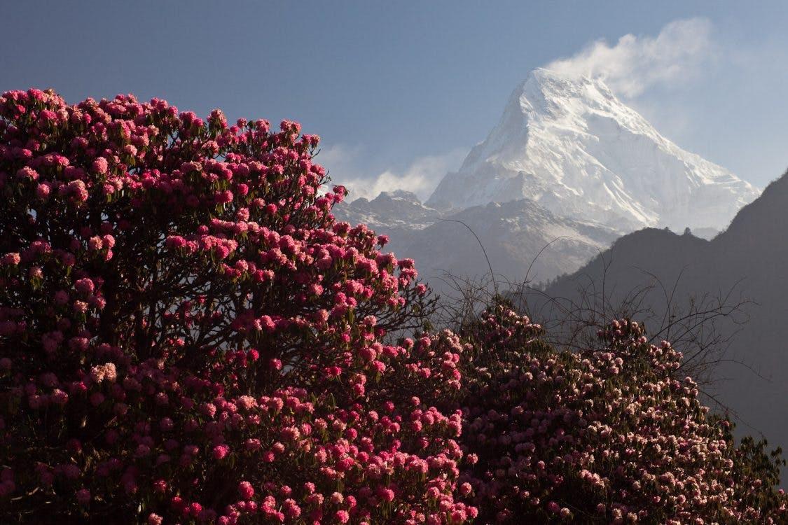 31-jarige Utrechter omgekomen in Nepal
