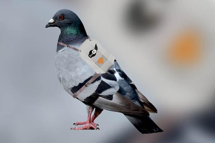 1 april: wifi via duiven, cavia's voor teamtrainingen, domino in TivoliVredenburg en de spaghettischijf