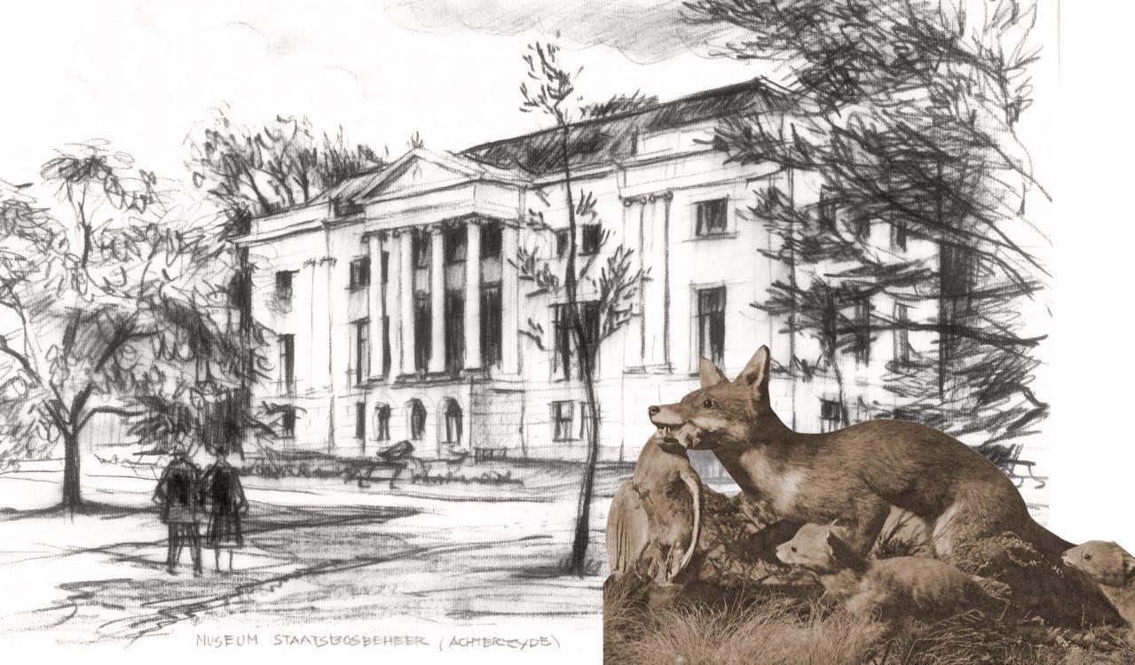 Verdwenen musea: Museum van Staatsbosbeheer aan de Museumlaan