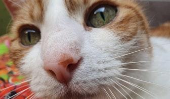 Louis Hartlooper Complex gaat kattenfilmpjes op groot scherm vertonen