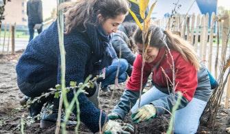 Honderden bomen geplant in Tiny Forest op Utrecht Science Park