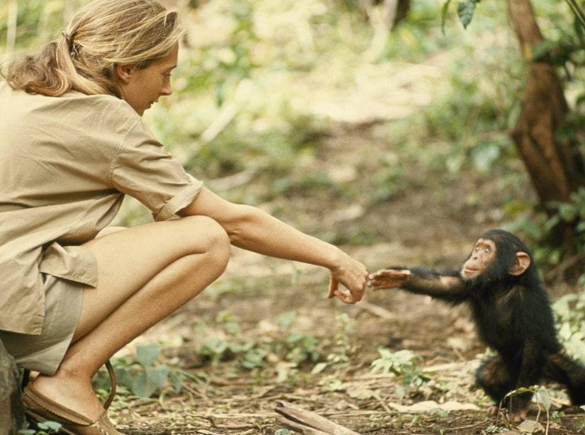 Wereldberoemde chimpansee-expert Jane Goodall geeft lezing op Universiteit Utrecht