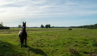 Geen roeiwater maar wel mogelijkheid voor woningen; Reacties op plan Rijnenburg Reijerscop