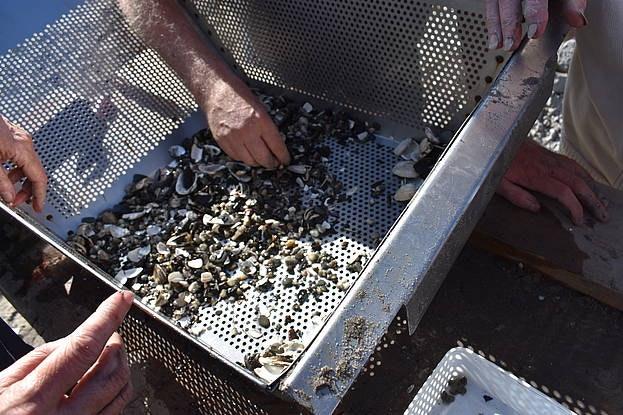 Utrechters kunnen helpen met sorteren historische vondsten