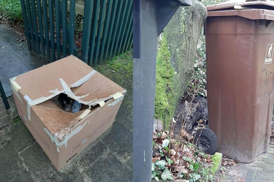 Doos met kittens en moederpoes gedumpt in Utrecht