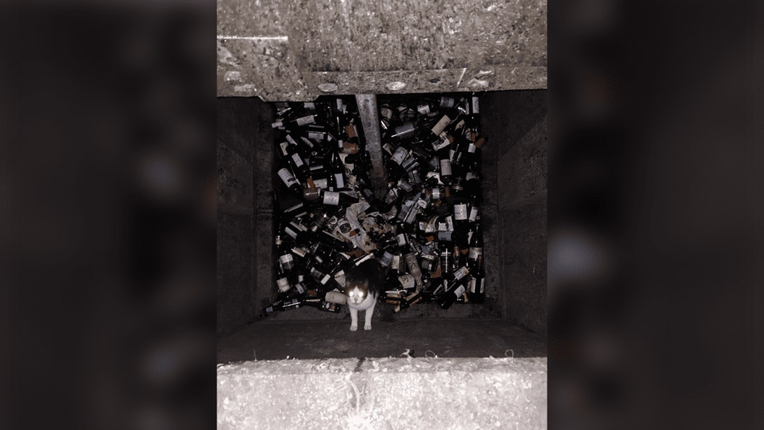 Kat in ondergrondse glascontainer Burgemeester Reigerstraat gejaagd