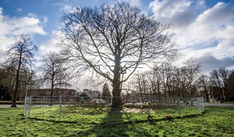 Het eind van de iconische rode beuk: 170 jaar oude boom gaat neer