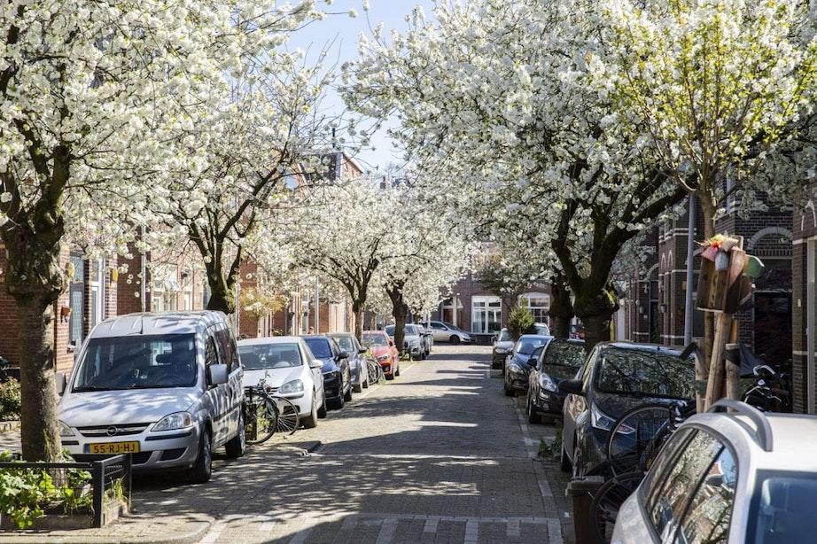 Foto's: Kleurrijke bloesem fleurt Utrecht op