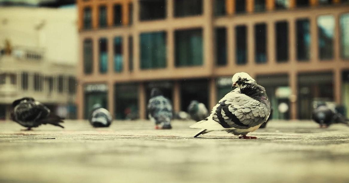 Utrechtse filmmaker maakt videoportret van stille stad