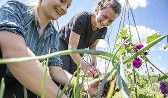 Geen eigen tuin in Utrecht? Er zijn andere opties om het groen op te zoeken