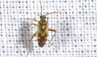 Utrechtse ecoloog doet bijzondere ontdekking op zijn balkon in Lunetten