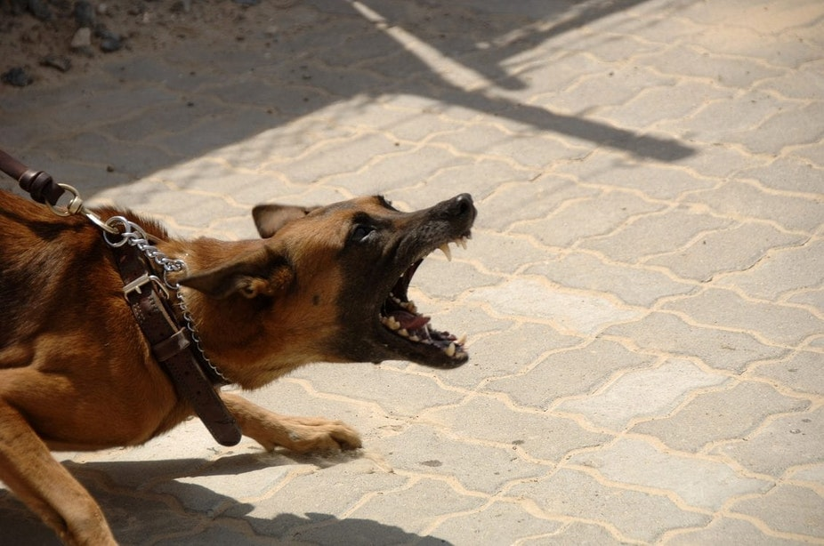 Utrechter (32) gewond na aanval van agressieve hond