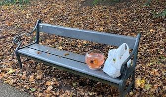 Kom met 17 goudvissen gevonden in Utrechts Julianapark