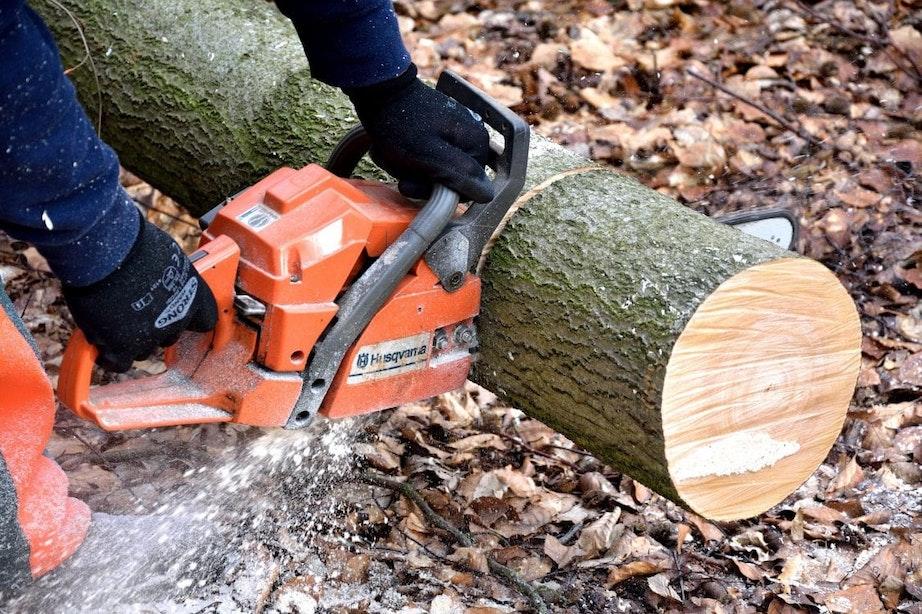 Gemeente Utrecht kapt met spoed 72 instabiele bomen in Lunetten