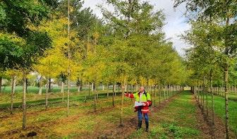 37 nieuwe bomen uitgezocht voor langs de singel in Utrecht