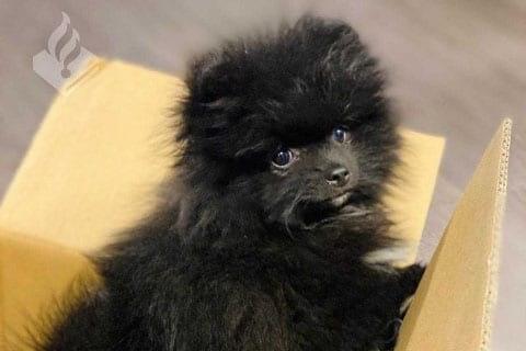 Hond achtergelaten in auto in Utrecht; dier na korte zoektocht herenigd met nieuwe eigenaar