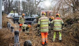 Boom in de Utrechtse speeltuin bij Lepelenburg valt: schade aan meerdere voertuigen