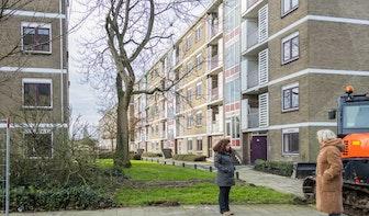 Buurtbewoners stoppen illegale bomenkap in Utrechtse wijk Hoograven