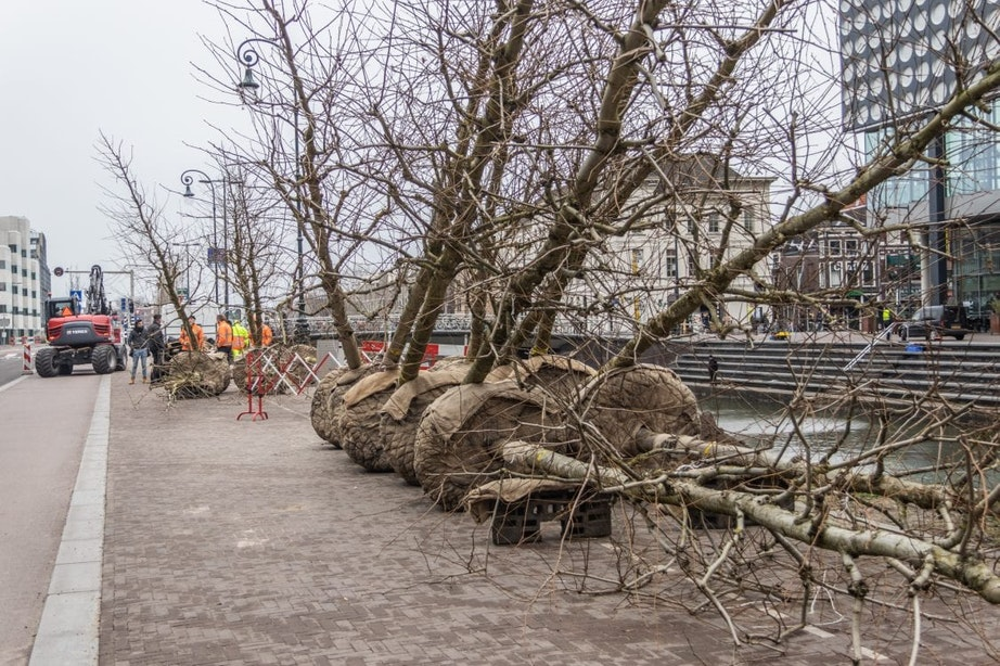 Vaste stek voor 31 nieuwe bomen in Utrechts stationsgebied