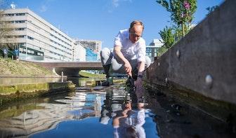 Eerste exemplaren van 1700 waterplanten in de oever bij de singel in Utrecht
