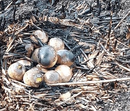 Jongeren steken droog gras in brand bij Haarrijnseplas; gebied van 100 vierkante meter in de as